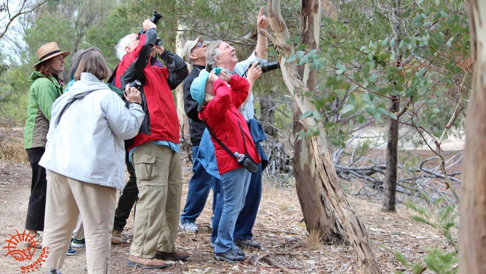guests-koala-watching